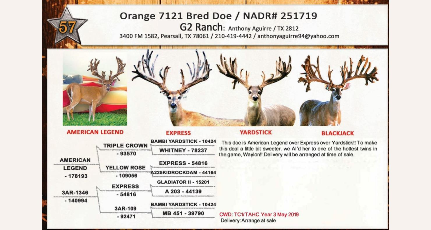 Lot 57 - Deer Breeders Corporation - Whitetail Deer Auction