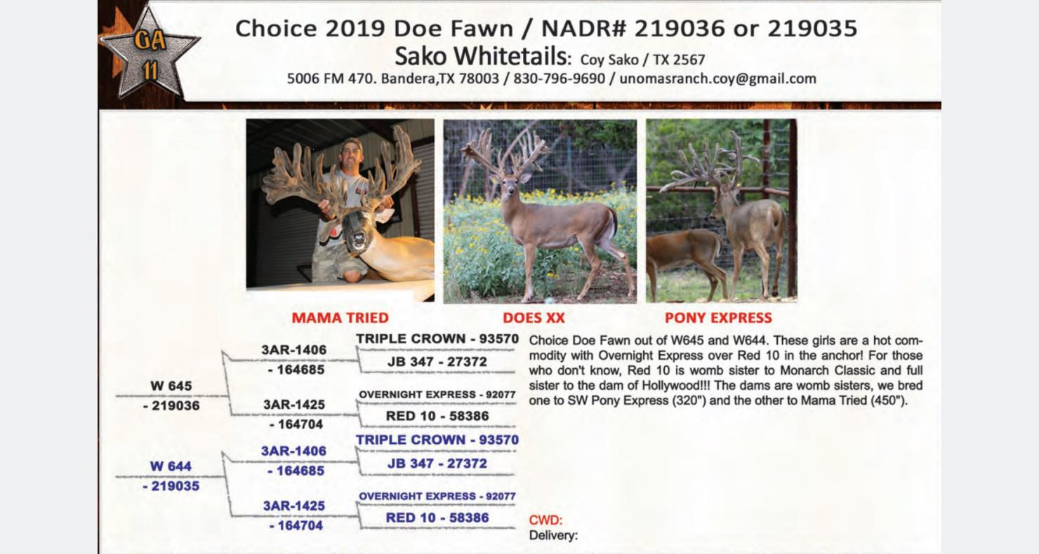 Lot ga11 - Deer Breeders Corporation - Whitetail Deer